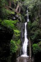 Dingman's Falls 1