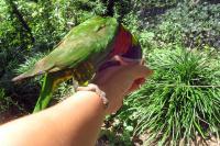 Elisa feeding the parrot
