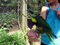 Gabriella feeding the parrot
