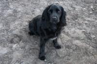 Pipa (Opa's dog)