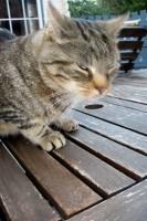 Nessy (Opa's cat)