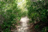 Corsons Inlet trail