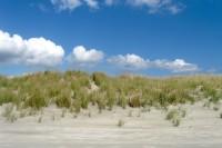 Corsons Inlet Beach
